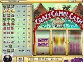 Spelautomater Crazy Camel Cash, Rival SS - Wyrmspel.com